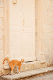 Cats in the old town of Budva, Kotor, Dubrovnik. Croatia and Mon Royalty Free Stock Image