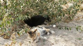 Cats Outdoors. Two cats spending time outdoors stock footage