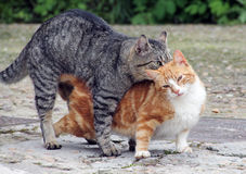 Cats. Outgoing domestic cat mammal carnivore Royalty Free Stock Photo