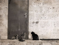 Cats, outside Royalty Free Stock Photos