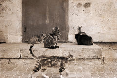 Cats, outside Stock Photos