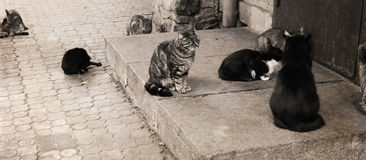 Cats, outside Royalty Free Stock Photo