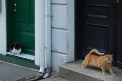 Cats outside doors Royalty Free Stock Image