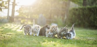 Cats outside. Seven cats is happinness. Cats outside stock image