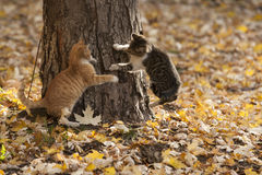 Cats in park Stock Photos