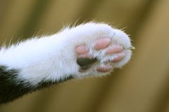 Cats paw. Close up of a Cats paw stock photos