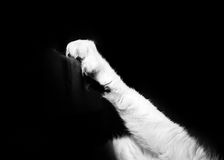 Cats Paw With Gripping Claws. A black & white image of a white cat digging her claws into a dark wooden structure against a pure black background Stock Images