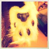 Cats paw Stock Images