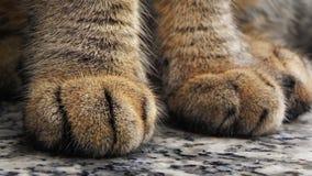 Cats paws Stock Photos