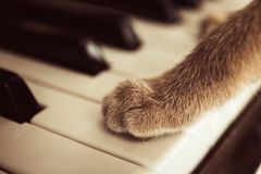 Cats paws lying on the piano keys close up cat playing stock image