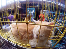 Cats. People see cats in cages sold in pet market in the city of Solo, Central Java, Indonesia stock photo