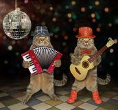 Cats perform in a nightclub. The two cats perform in a nightclub. One plays the acoustic guitar and the second plays the accordion stock image