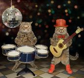 Cats perform in a nightclub 2. The two cats perform in a nightclub. One plays the acoustic guitar and the second plays the drums stock image