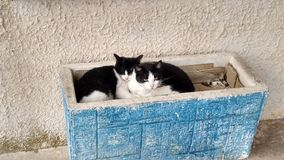 Cats in a planter Stock Image