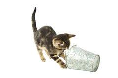 Cats play Royalty Free Stock Photo