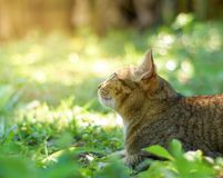 Cats play in the garden Stock Image