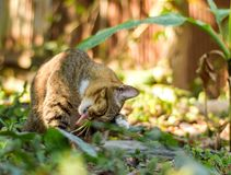 Cats play in the garden royalty free stock photo