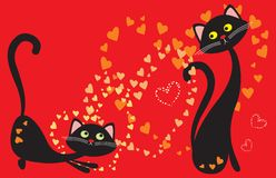 Cats play love Stock Photos