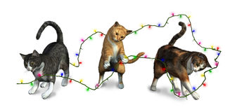 Cats playing with Christmas Lights Stock Photo