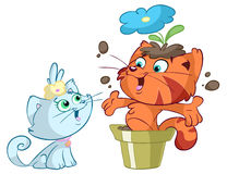 Cats playing with flowers Royalty Free Stock Photo