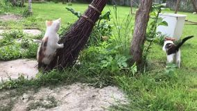 Cats playing in the garden on a broom stock video