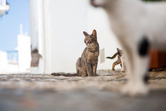 Cats playing. On the street in a shade during hot summer day.l Stock Photo