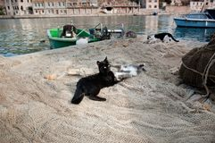 Cats playing on thr fishing nets. Stock Photos