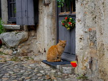 Cats - Please let me in Royalty Free Stock Images