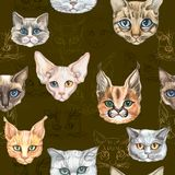 Cats portraits of different colours sitting in line. Vector hand drawn seamless pattern. Graphics for cats lovers. stock illustration