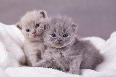The cats poses for photos Royalty Free Stock Images