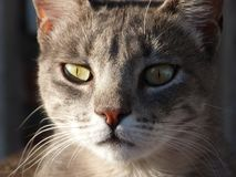 Cats posing at the sunset light. Portraits of streets cats at sunset royalty free stock image