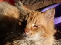 Cats posing at the sunset light. Portraits of streets cats at sunset royalty free stock images