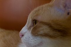 Cats profile eye stock images