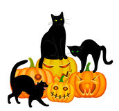Cats and pumpkin Stock Photo