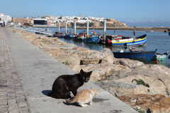 Cats in Rabat, Morocco. Cats on the promenade of Bou Regreg river in Rabat, Morocco Stock Photo