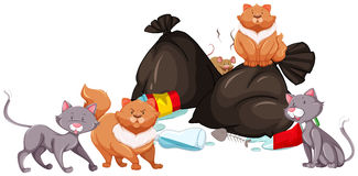 Cats and rat around the garbage pile Stock Photo