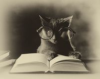 Cats reading, black and white Stock Images