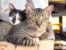 Cats in real environment Royalty Free Stock Photo