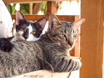 Cats in real environment Royalty Free Stock Photography