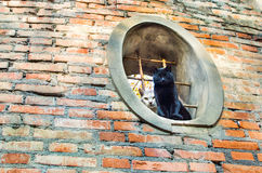 Cats red brick oval window Royalty Free Stock Images