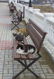Cats resting on a bench. Cat resting on a bench in spring day Royalty Free Stock Photography