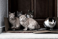 Cats resting in a doorstep Royalty Free Stock Images