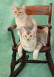 Cats on rocking chair. Two male somali cats sitting on a rocking chair Royalty Free Stock Image