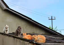 Cats on the roof royalty free stock image