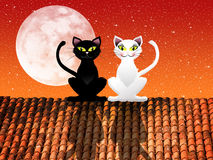 Cats on roof Stock Images