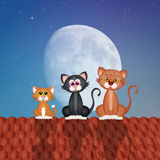 Cats on roof Stock Photo