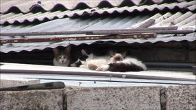 Cats on the roof are sleeping. stock footage