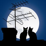 Cats on the roofs. In the night sky Stock Image
