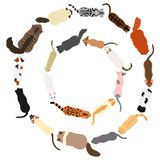 Cats round frame set. Set of various cats in circle from top view on white background vector illustration