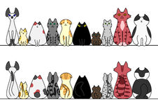 Cats in a row with copy space,front and back Royalty Free Stock Photos